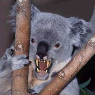 Australian Icons:The Ferocious Australian Drop Bear (2/6)